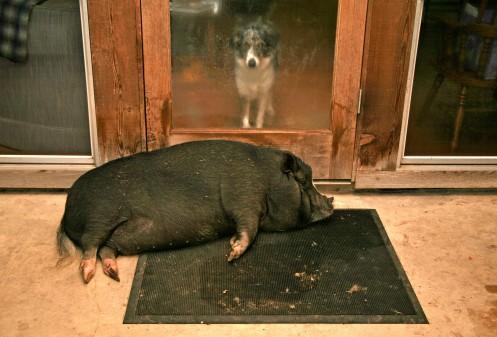 Miss Piggy was also scared...